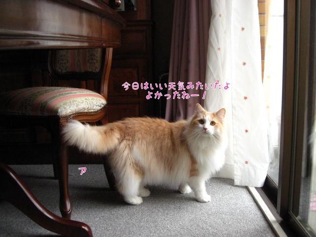 47いい天気.JPG